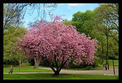 Zum Thema: Endlich Frühling