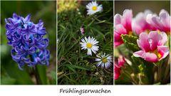 """Zum Thema """"Frühlingserwachen"""""""