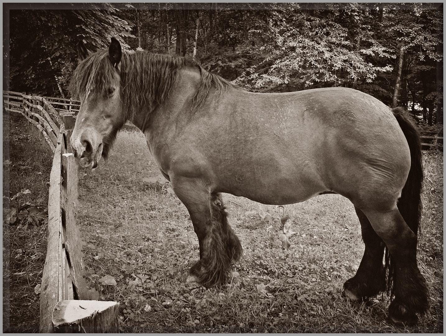 "Zum Thema ""PFERDESTÄRKEN"" - Horsepower -"