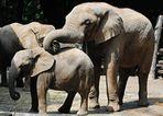 ZUM THEMA: Tierkinder