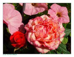 """Zum Thema """"wenn die Rosen blühen"""""""