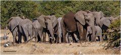 zum welt-elefanten-tag....