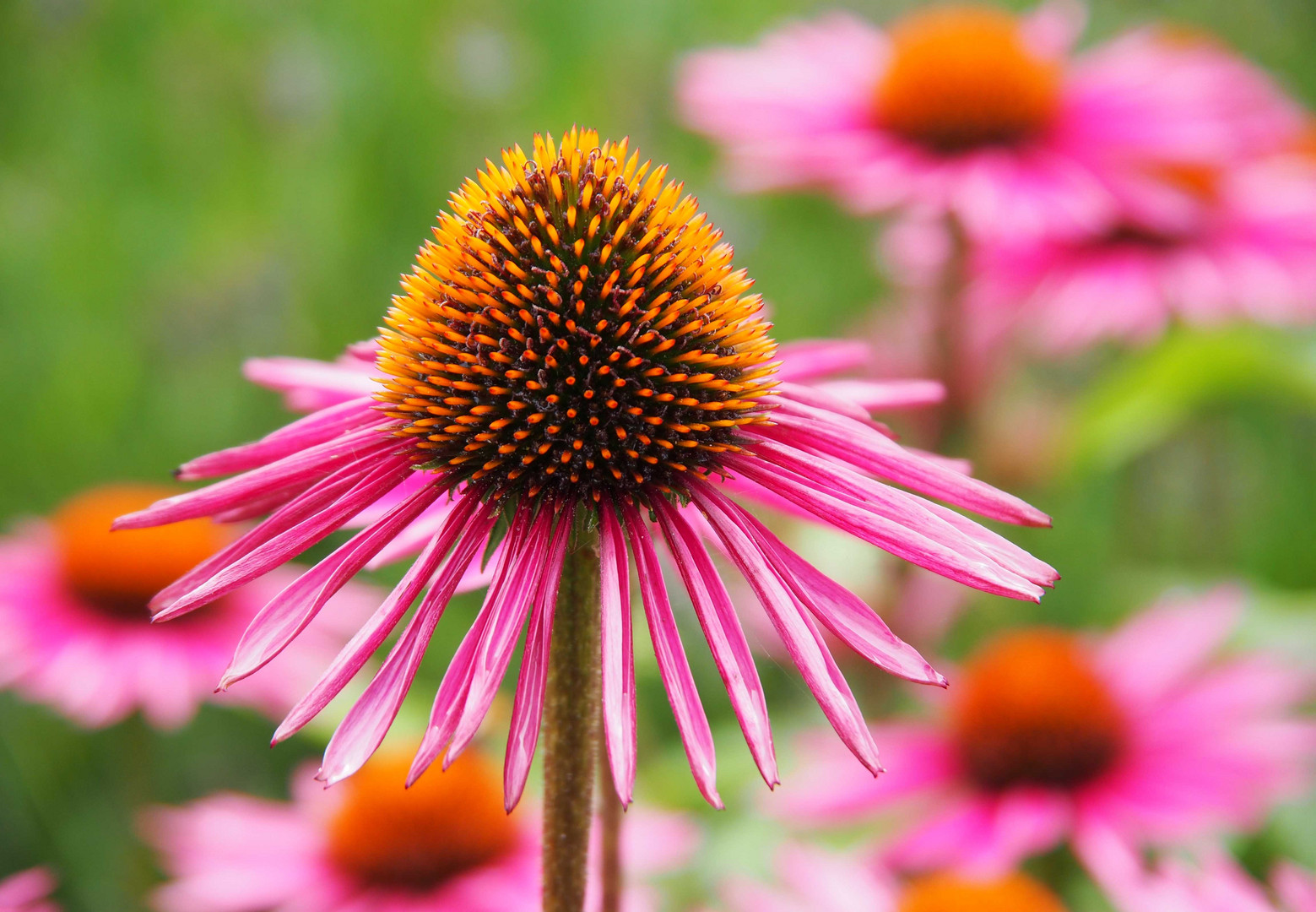 zum Wochenende eine Blume...