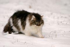 Zumselchen im Schnee