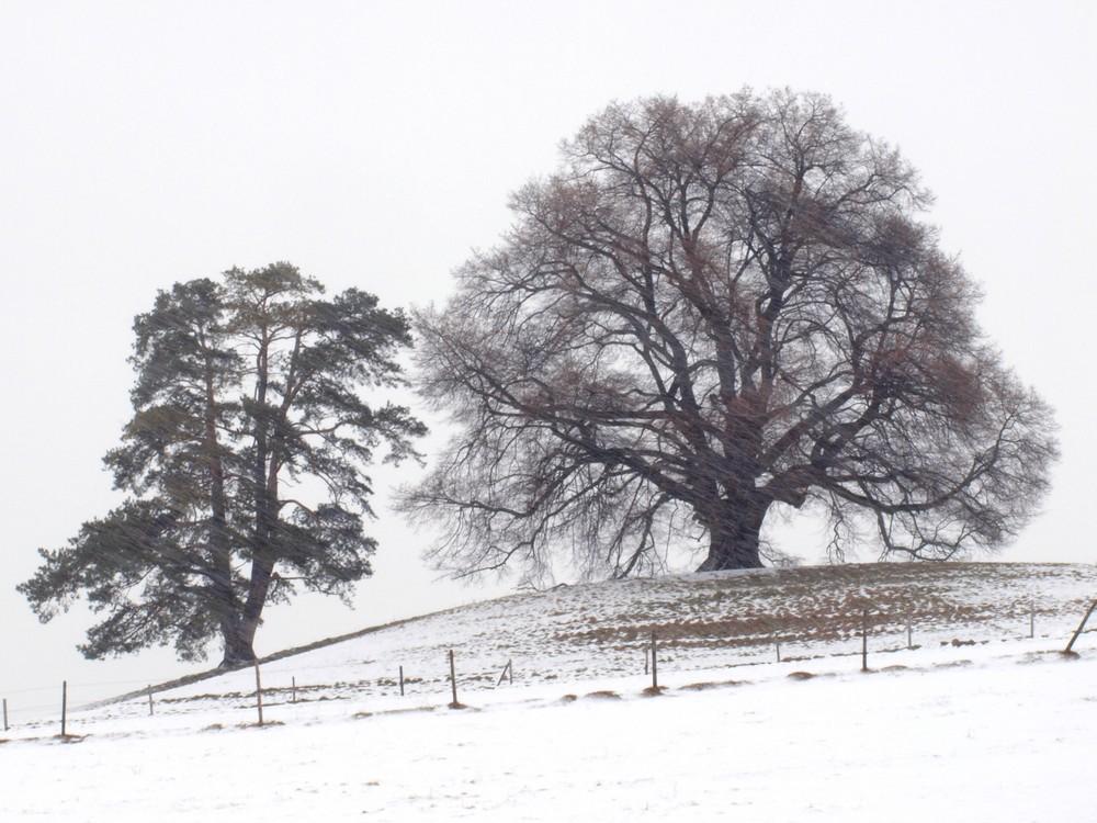 Zundelbacher Linde im Schneetreiben von SW