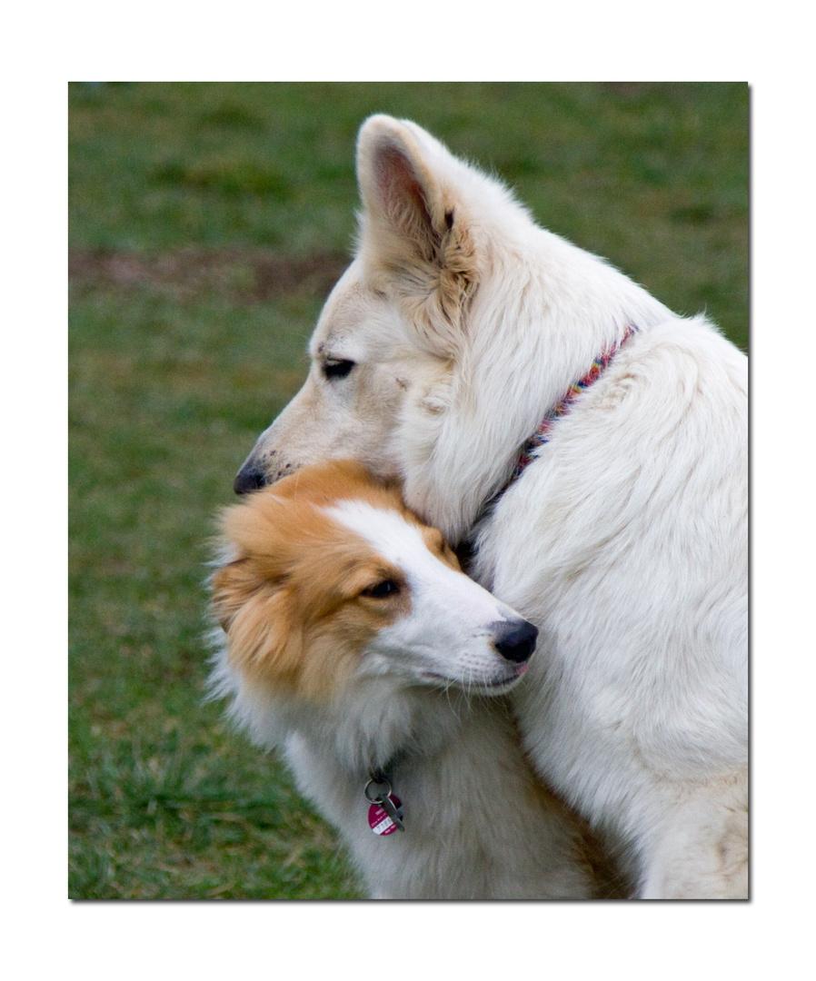 Zuneigung 2