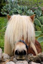 zur Zeit blindes Pferd