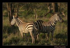 Zurück aus Tanzania