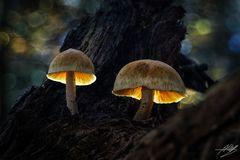 Zurück im Märchenwald