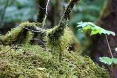 Zurück im Regenwald