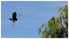 ---- Zurück zum Nest ----