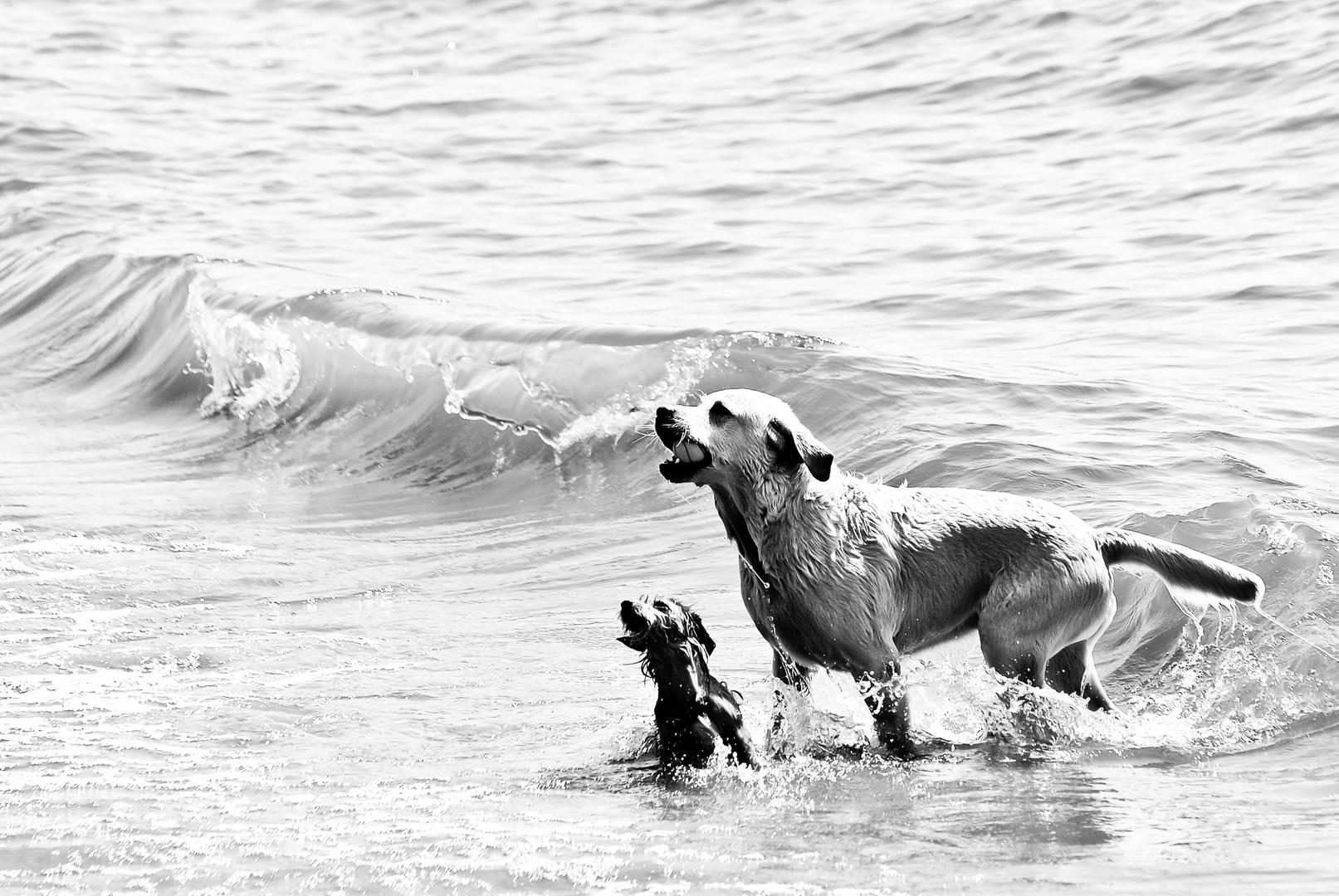 Zusammenspiel im Wasser