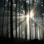 Zusammenspiel von Sonne und Nebel 2