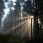 Zusammenspiel von Sonne und Nebel 3