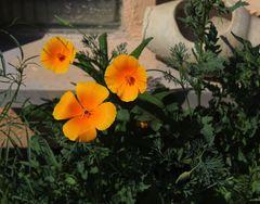 Zusatzsonne im Garten