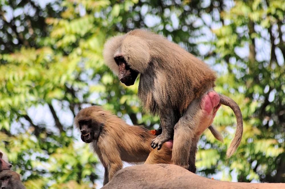 Affen Bilder