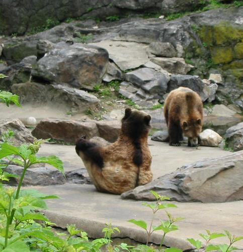zwei Bären im Zoo