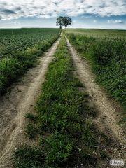 Zwei Bäume am Ende des Weges
