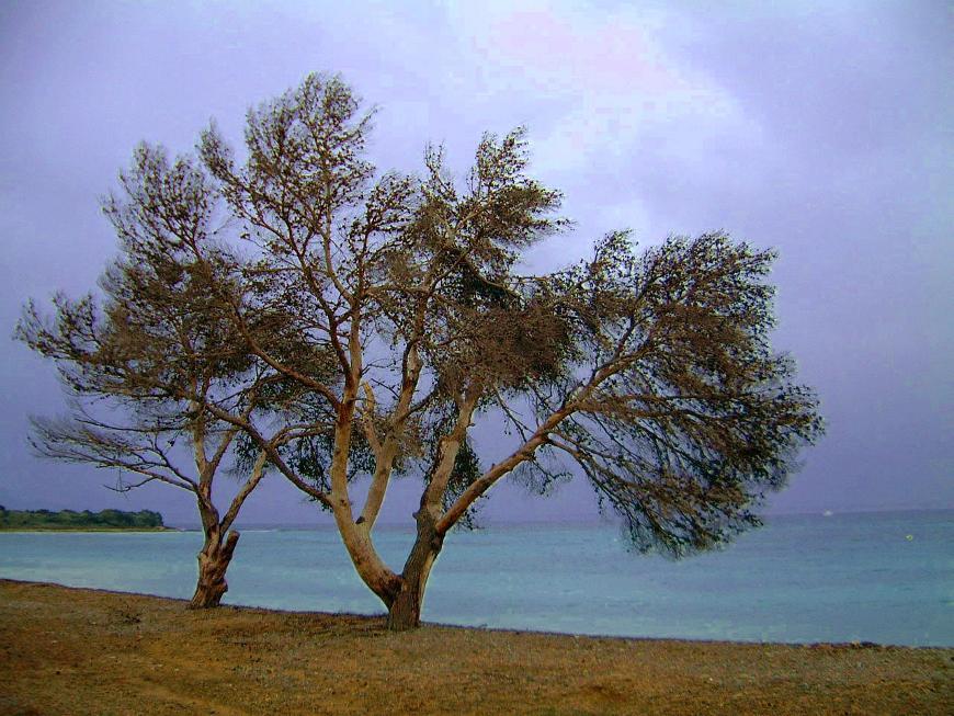 Zwei Bäume am Meer