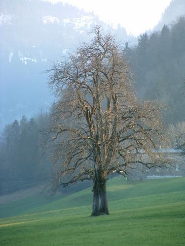 Zwei Bäume die miteinander leben