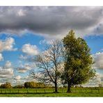 Zwei Bäume im Herbst ...