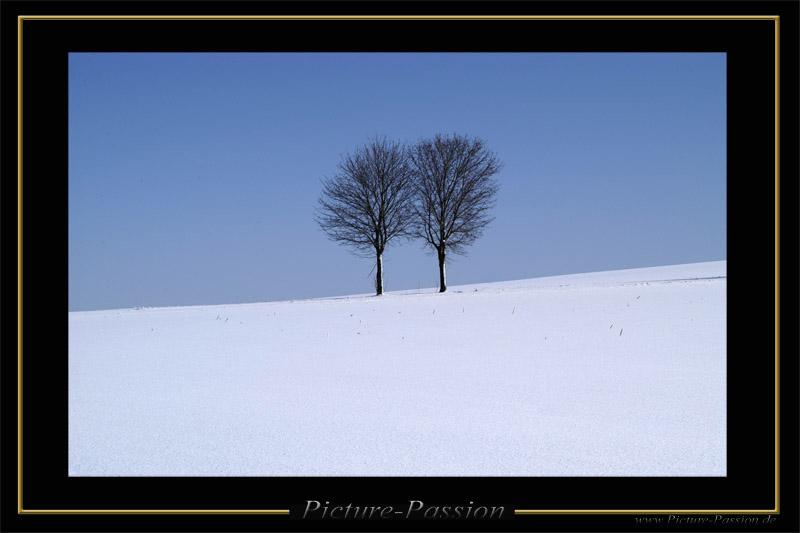 Zwei Bäume im Winter