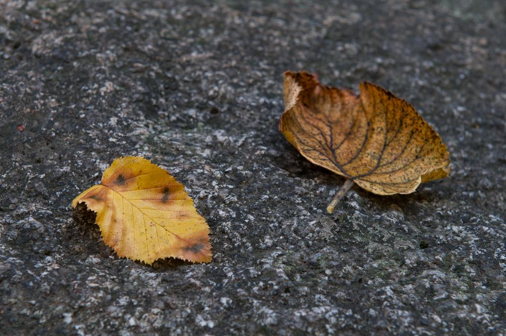 zwei Bläter im Herbst