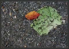 Zwei Blätter im Herbst