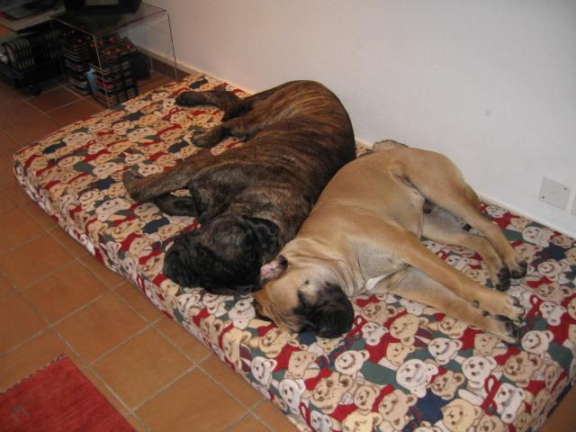 Zwei dicke Freunde bei der Siesta - Moritz und Luki