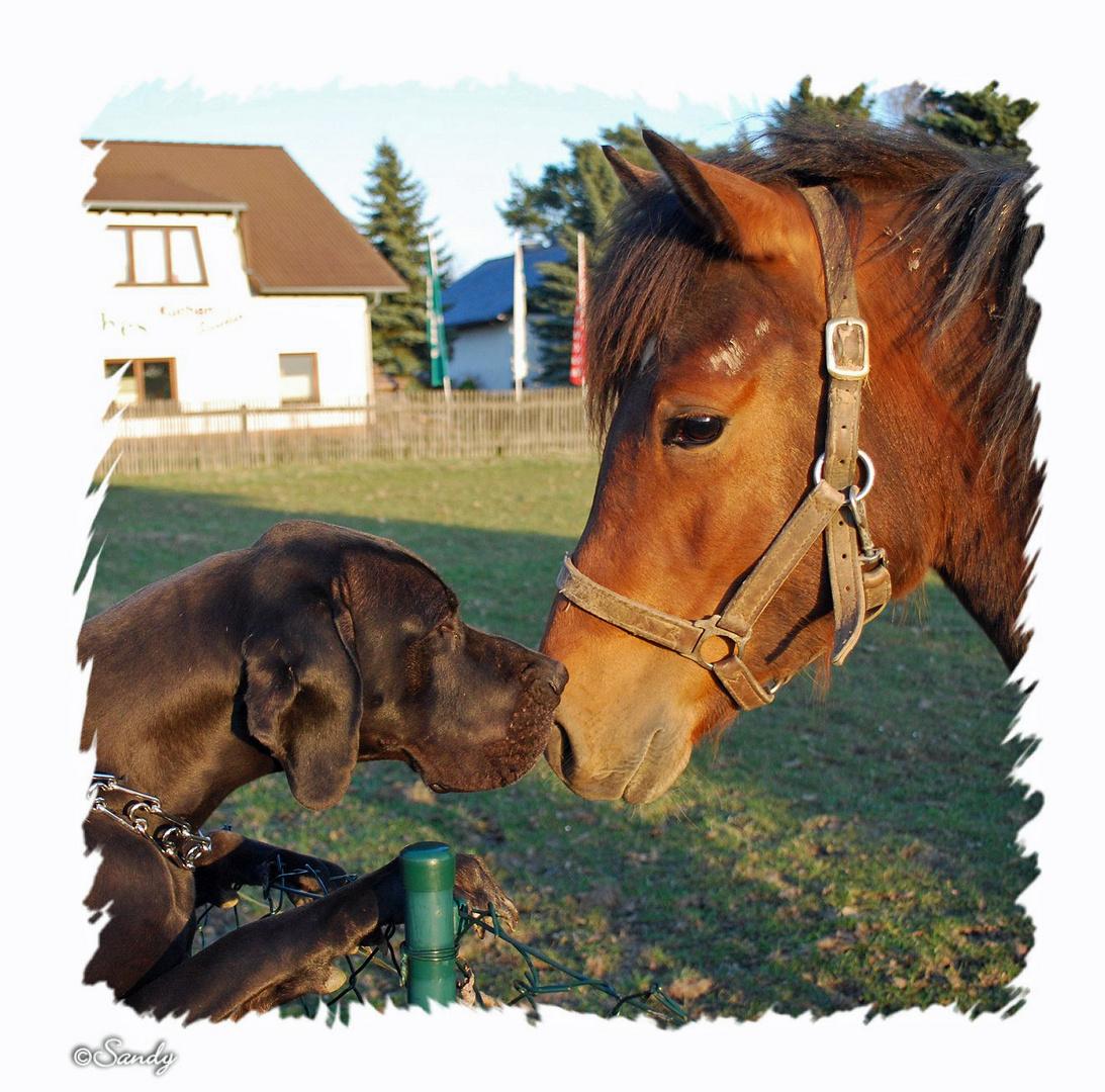 Zwei die sich lieben