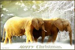 Zwei Elefanten im Schnee ...