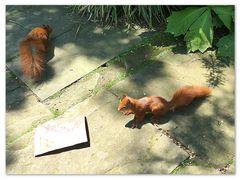 Zwei freche Eichhörnchen