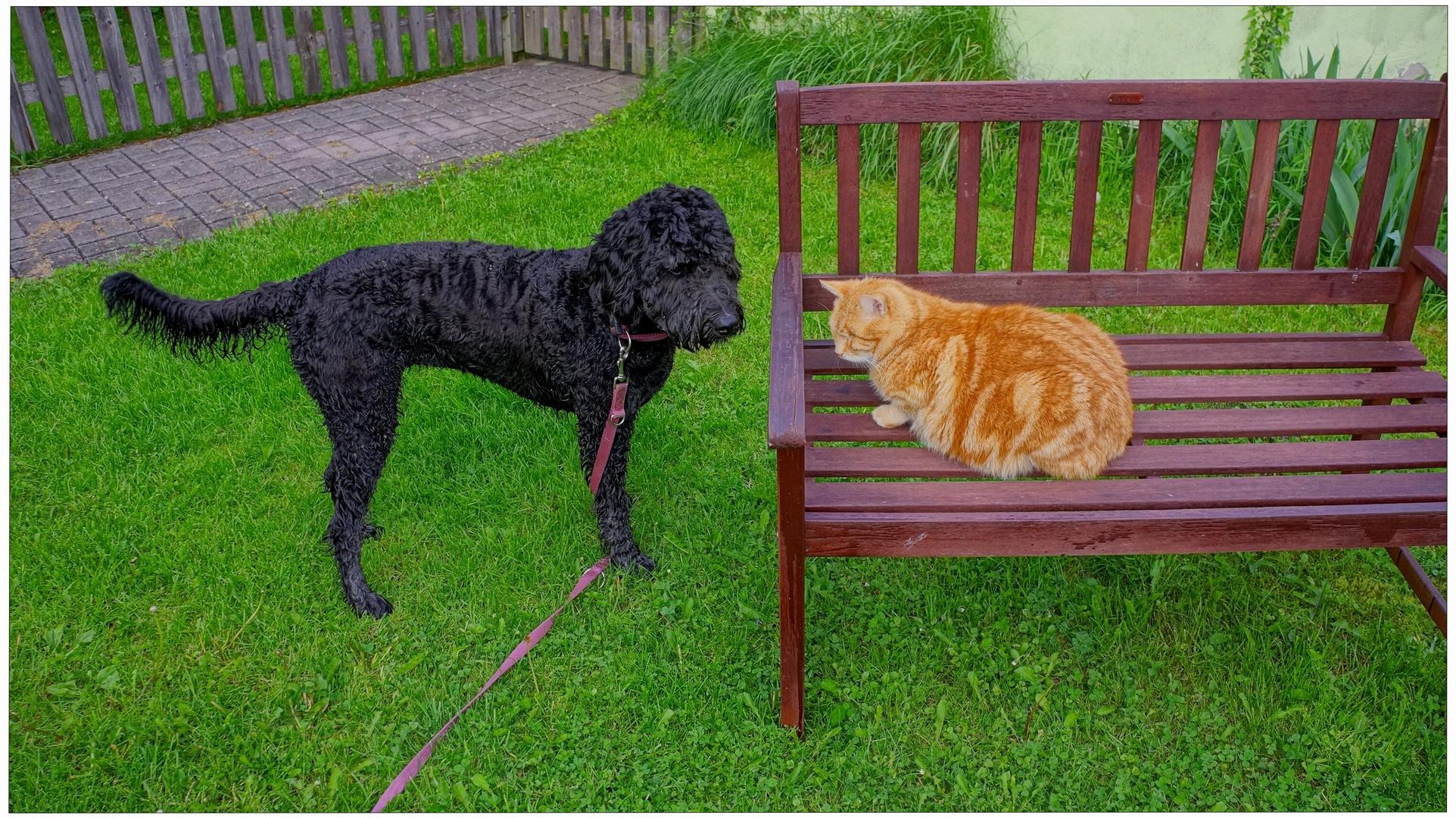 zwei Freunde (dos amigos)