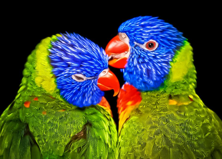 Bilder Bunte Vogel