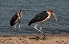 zwei hässliche vögel ;-)