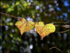 zwei Herz Herbst Blätter