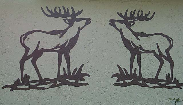 Zwei Hirsche in Neu-Bottenbroich
