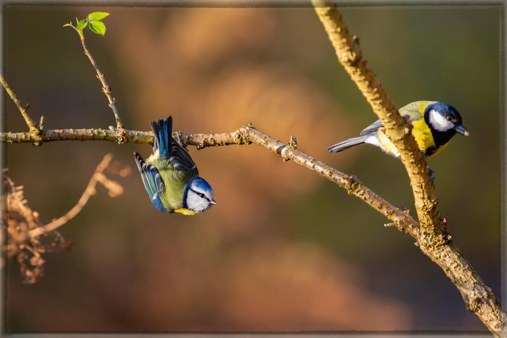 Zwei hübsche Vögel