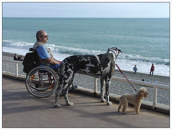 Zwei Hunde und ihr Herr betrachten das Meer
