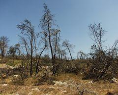 zwei Jahre nach dem Waldbrand