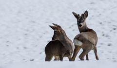 Zwei Jungs im Neuschnee