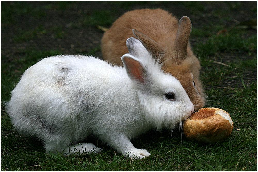 Zwei Kaninchen...