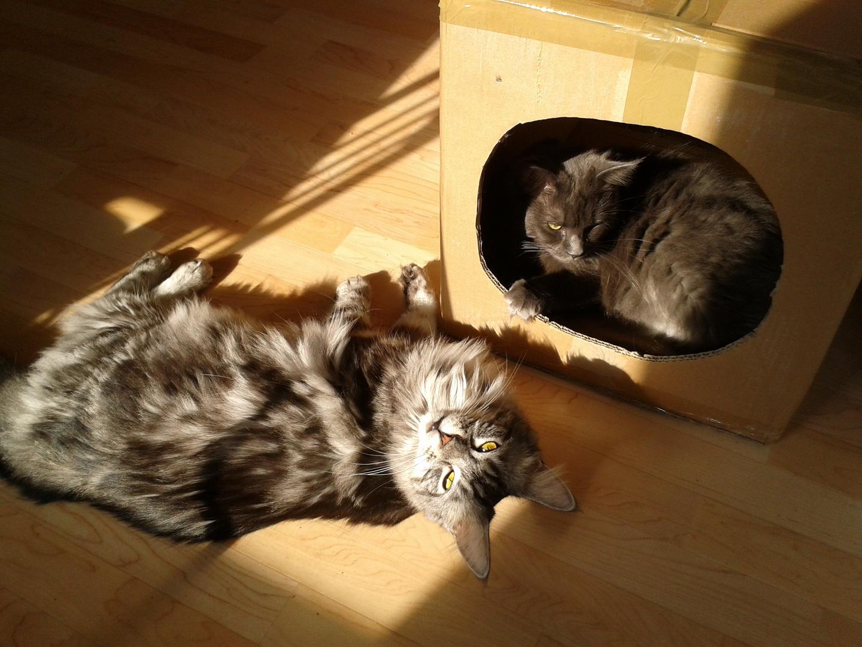 Zwei Kater im Sonnenschein