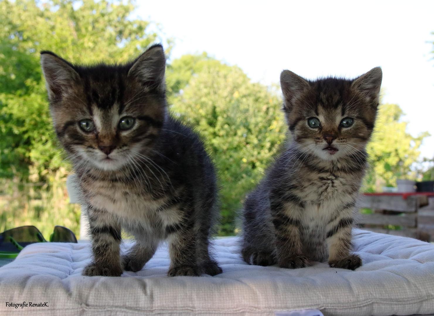 Zwei Katzenbabies ca. 5 -6 Wochen alt