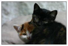 zwei kleine