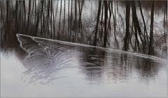 Zwei kleine Enten durchpflügen das Wasser.