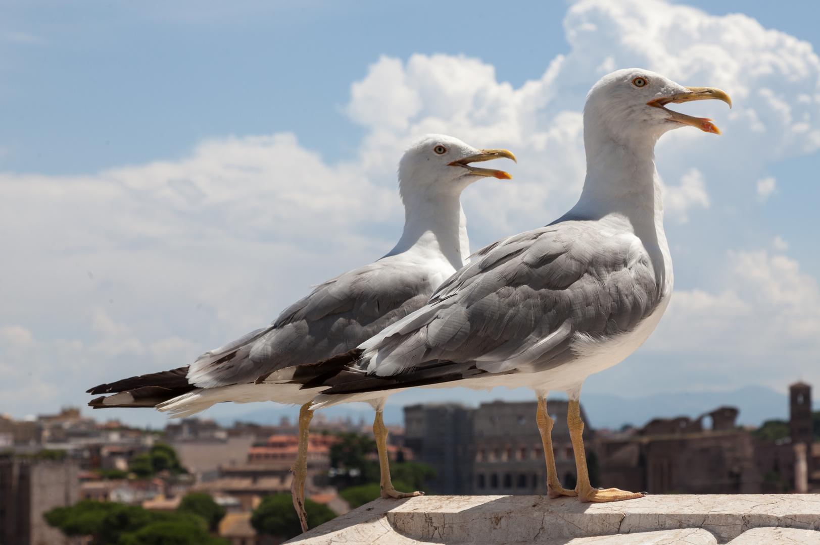 """zwei kleine Italiener oder """"Italiens next Top Möwe"""""""
