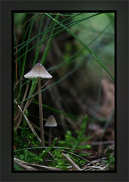 zwei kleine Pilze