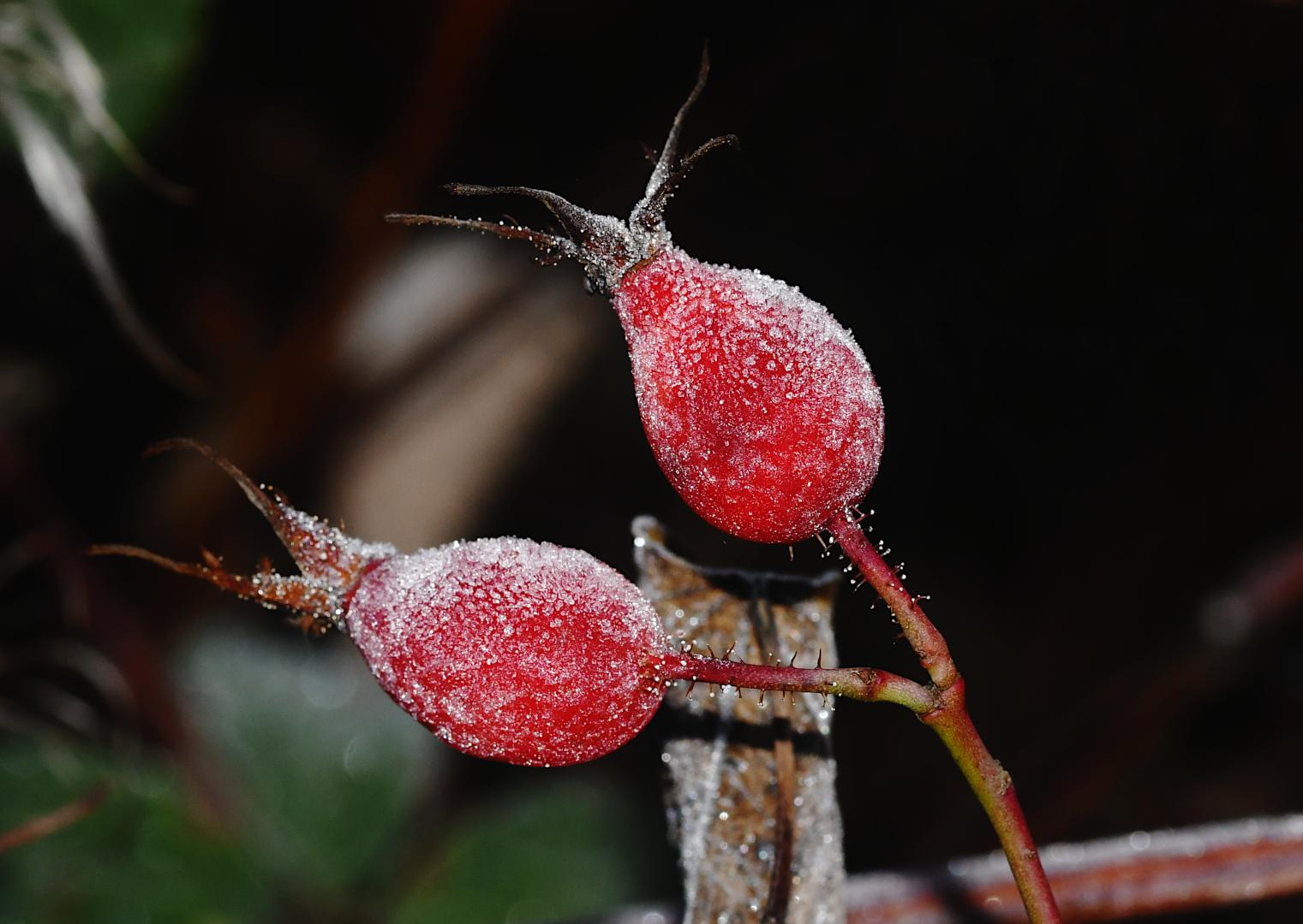 Zwei konservierte rote Früchtchen...