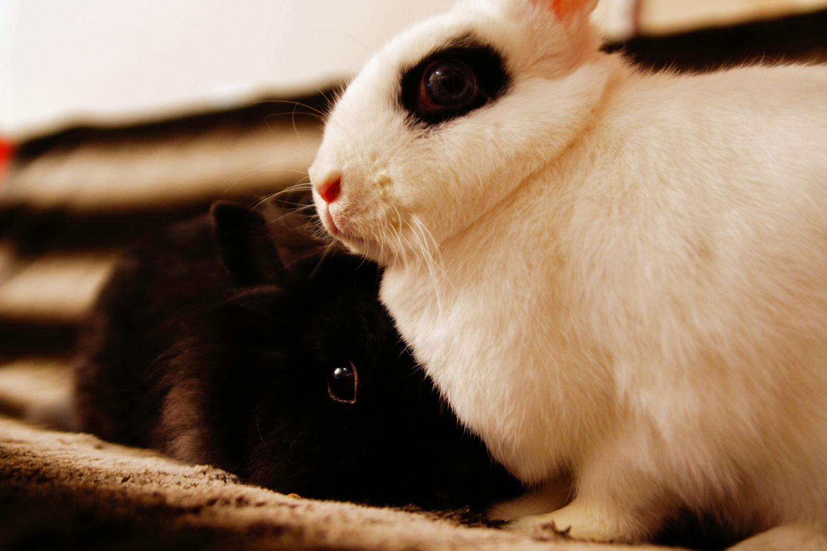 Zwei Lieben